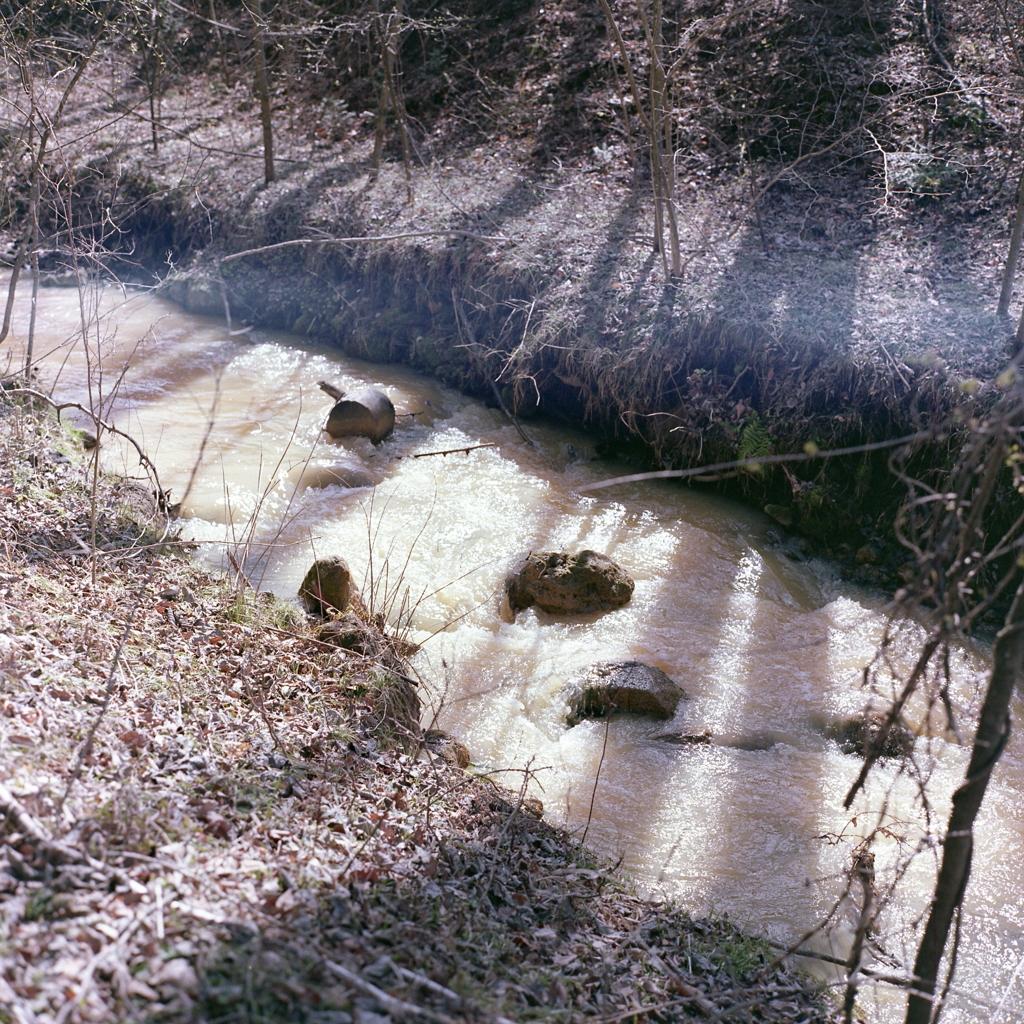 朝の陽ざしに木立の影と濁川