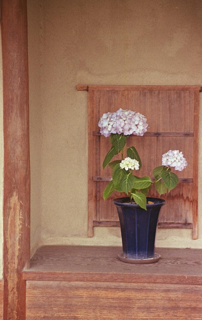 東屋に紫陽花の鉢
