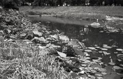モノクロで生地川の蓮風景