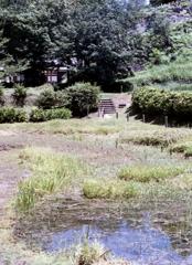 メダカの水池