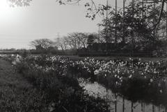 内津川の夕景 ~マリ散歩で…