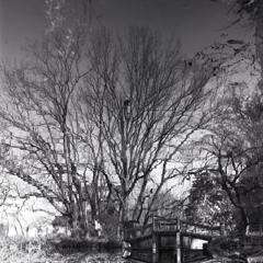 水鏡の冬木