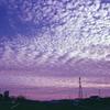 夕暮れのうろこ雲