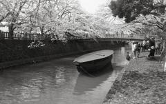 桜の水門川と廻船