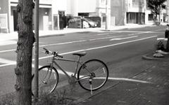 プリンセス通りの自転車