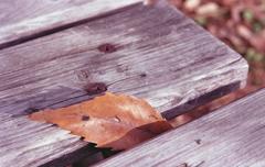 ベンチの枯葉