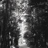 木々の中の参道
