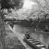 水門川の春景色