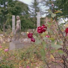 赤い薔薇と少女像