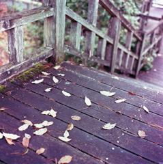 木桟橋の落葉