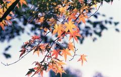 小牧山山頂に色づく紅葉Ⅱ
