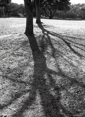樹影を撮る。 ~名古屋市守山区小幡緑地にて。
