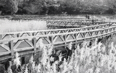 九十九折の桟橋