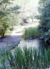 「散策路の水辺」のカラーネガ