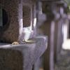 石灯篭と銀杏