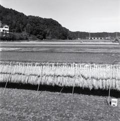 稲架掛けのある風景 ~今日の撮影・現像より