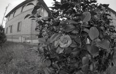 椿が一輪咲いていた。