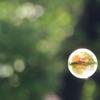 奇跡の球体