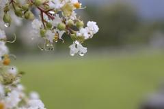 雨の後は水滴を探そう⑰