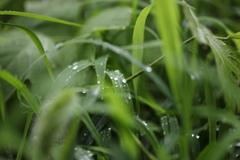 雨の後は水滴を探そう④