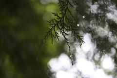 雨の後は水滴を探そう⑮