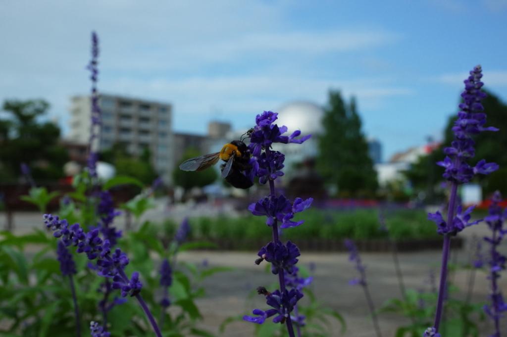 ハチにフォーカス