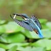 若鳥の羽ばたき2