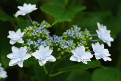 今年も墨田は花盛です