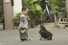 下町犬の散歩
