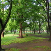 雨上がりの公園