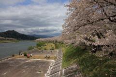 桧木内川堤の桜並木('12)
