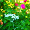 花壇の彩り