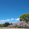清々しい春の公園
