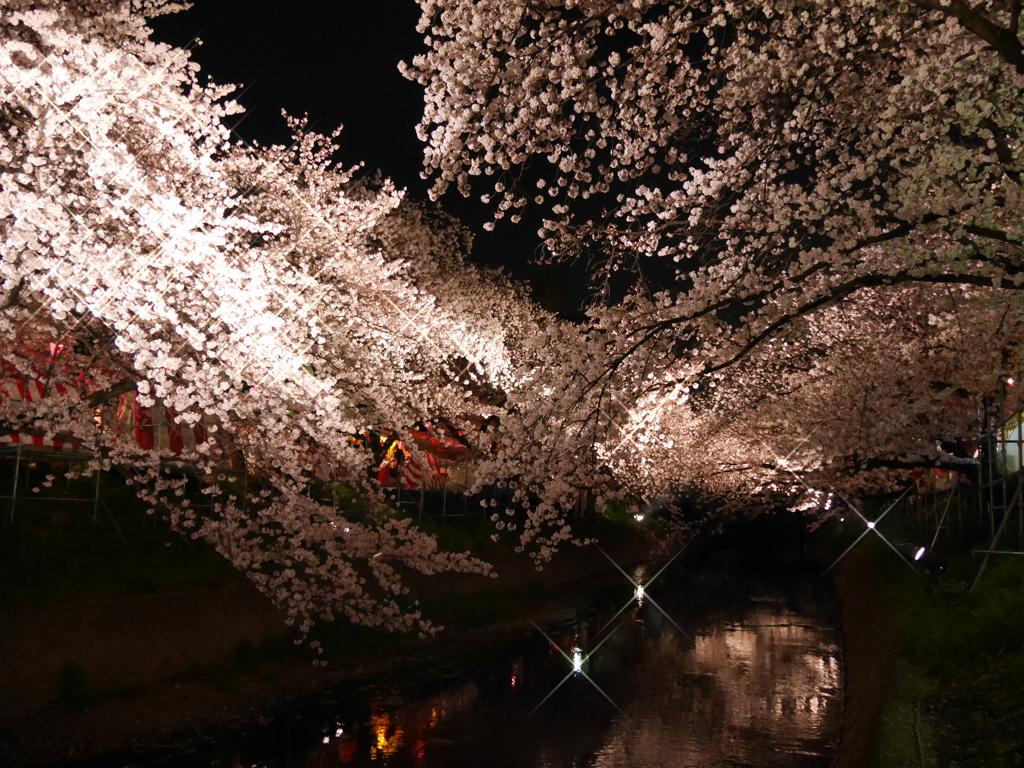 夜桜'16②