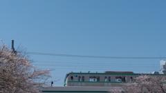 メトロと桜