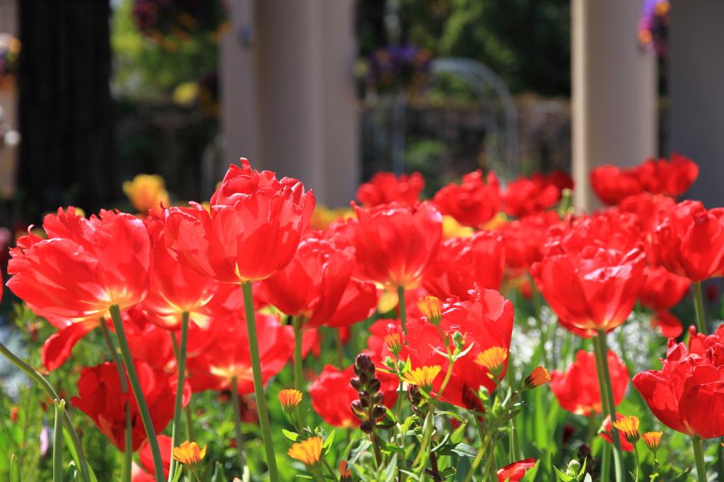 春の花'16③