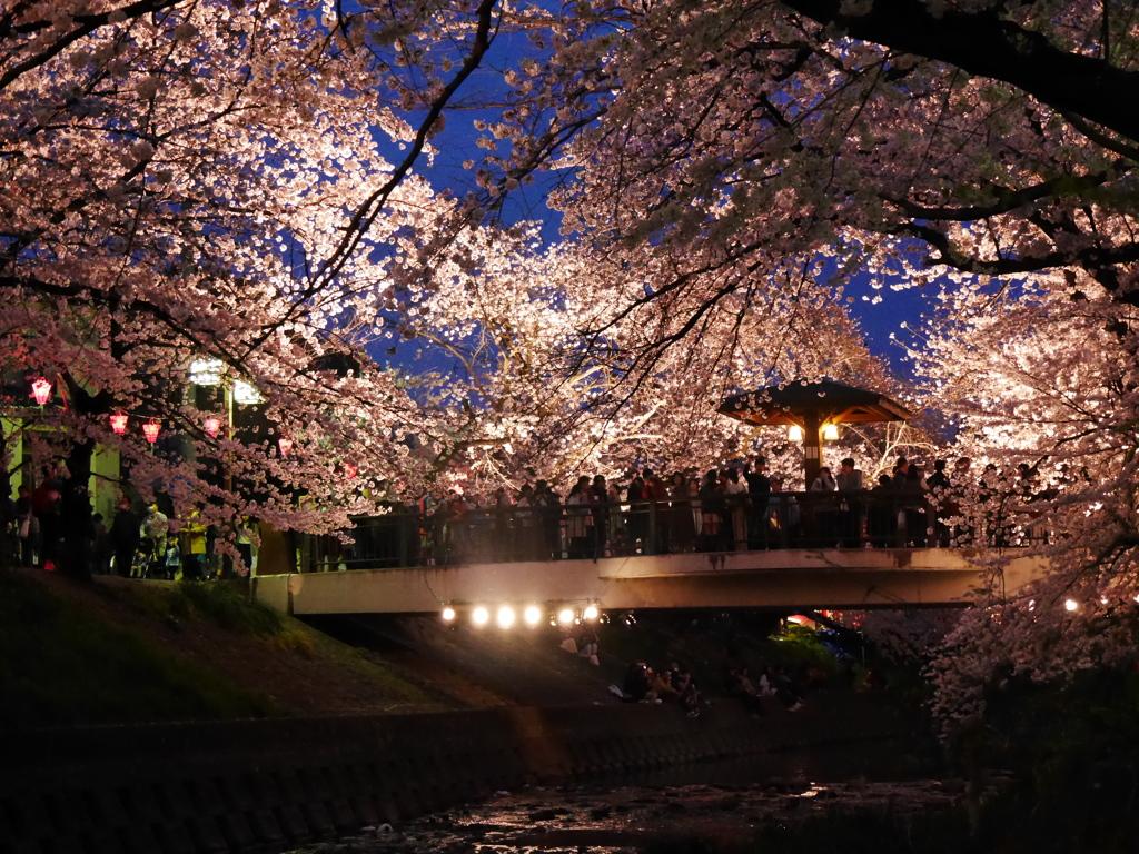 夜桜'16