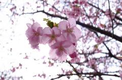 ひかりにみちた世界に咲く花