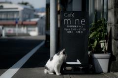 beckoning cat..