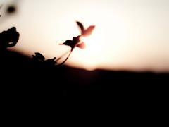 gOod morning, wildflowers..