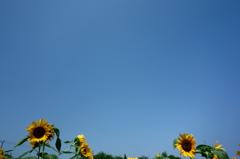 すっかり夏です!