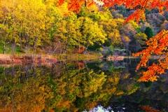 あっという間の秋