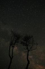 星降る夜に(再現像)