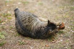 トラちゃん vs マツボックリ