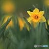 春を迎えて