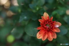 小さな開花