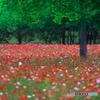 新緑と赤い絨毯