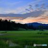 夕映えの湿原