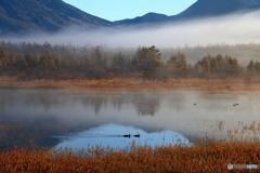 湿原 朝の情景