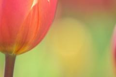 Seedlings of love